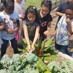 Reid Elementary School Student Gardeners